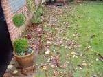 Leaves need raking up